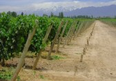 Argentine_wine2