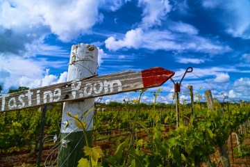 clouds over the Vino Noceto vineyards in Amador County