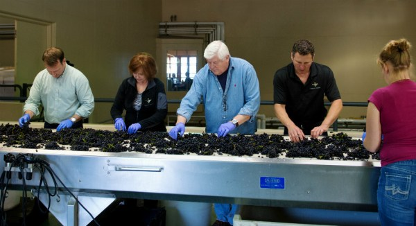 Ken and Grace Grape Sorting