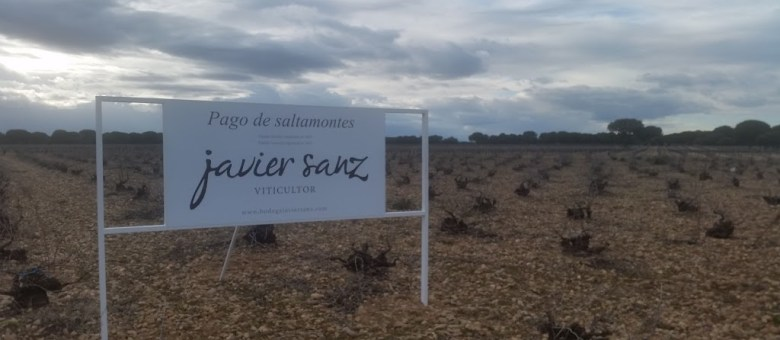 Verdejo – Spain's answer to Sauvignon Blanc