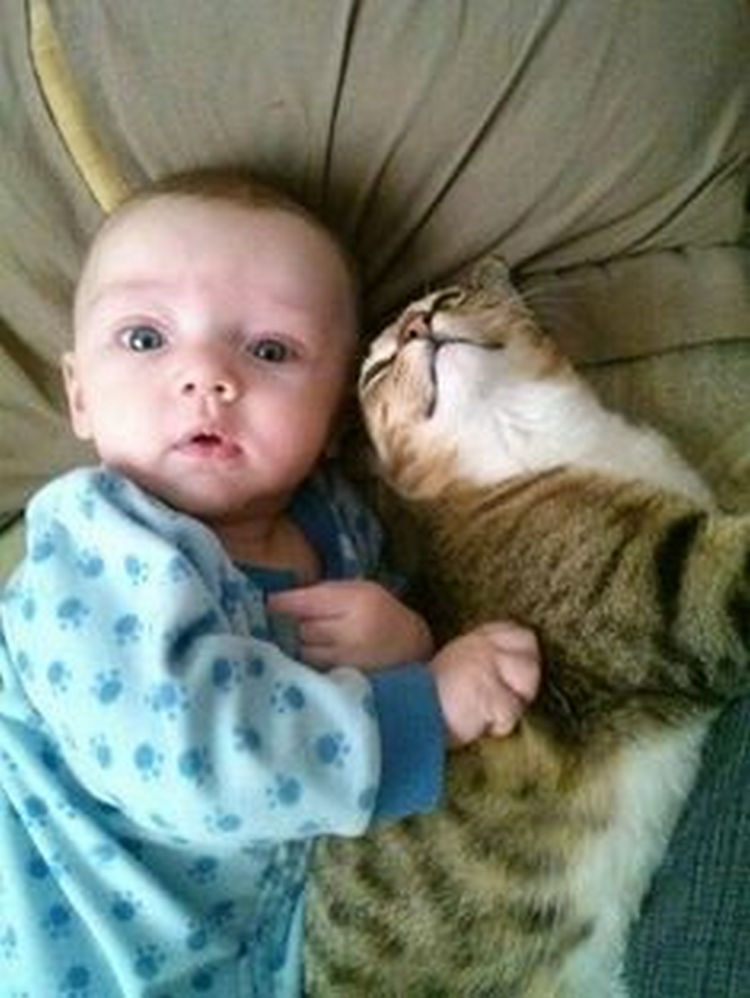 Cute Kitties Hd Wallpapers 21 Cute Cats Babysitting Adorable Babies Can You Feel The