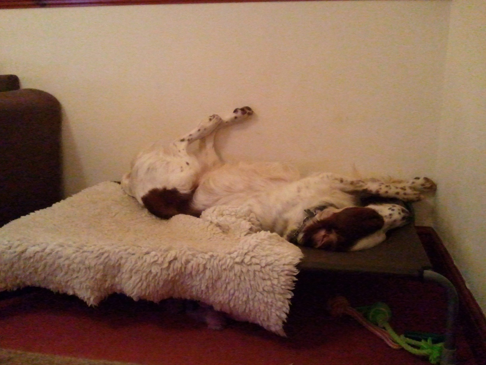Product recommendations: The Original Hi K9 Raised dog bed