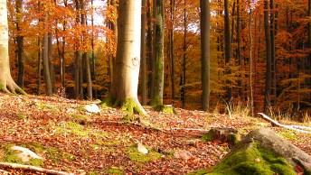Woche_der_Nachhaltigkeit_auf_der_Ostsee_Insel_Ruegen