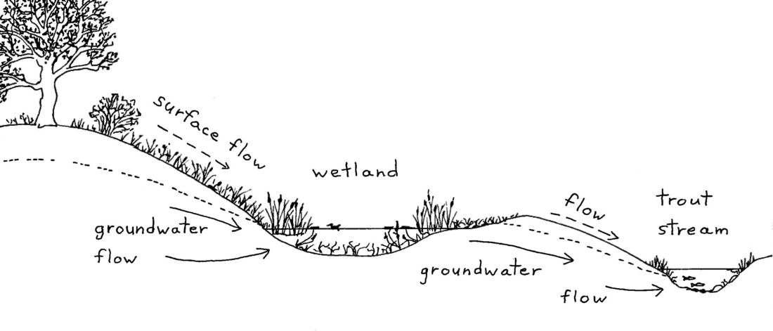 Wetlands and groundwater It\u0027s all connected Wisconsin Wetlands