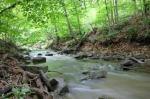 http://wisefilipinosoldier.com/wp-content/uploads/2013/08/forest-creek.jpg