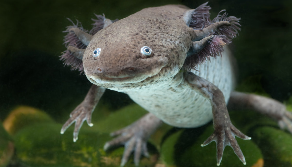 10 Impossibly Weird Creatures You Must See Wise Living Magazine