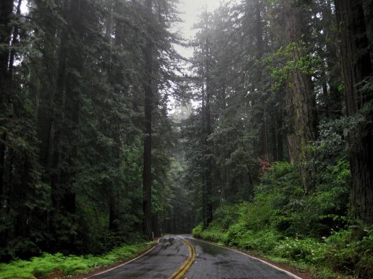 Ooty Hd Wallpapers Redwoods Amp San Francisco Ca Photo Pacific Coast Highway