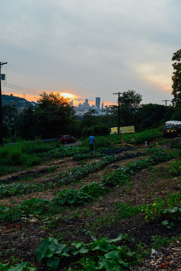Sunset at Hazelwood Urban Farms