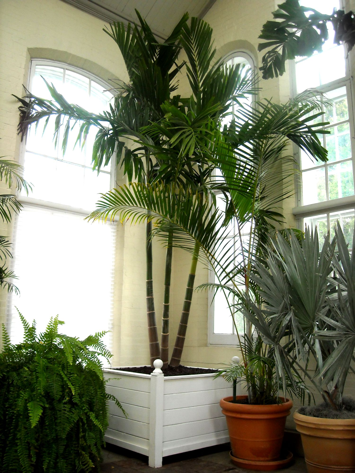 Walter Knoll Palm Piper House, Walter Knoll Florist Client, Exotic Palm