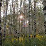 Wolf-Creek-Ranch-Aspen-Forest
