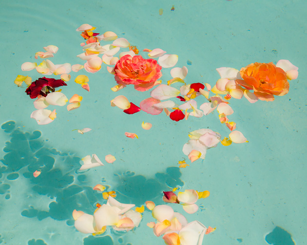 Picture of the Week 36 \u2013 Floating Rose Petals Recording The Light