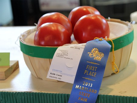 Prize-winning tomatoes at the Maryland State Fair 2013