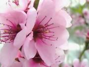 Spring Flowers Desktop