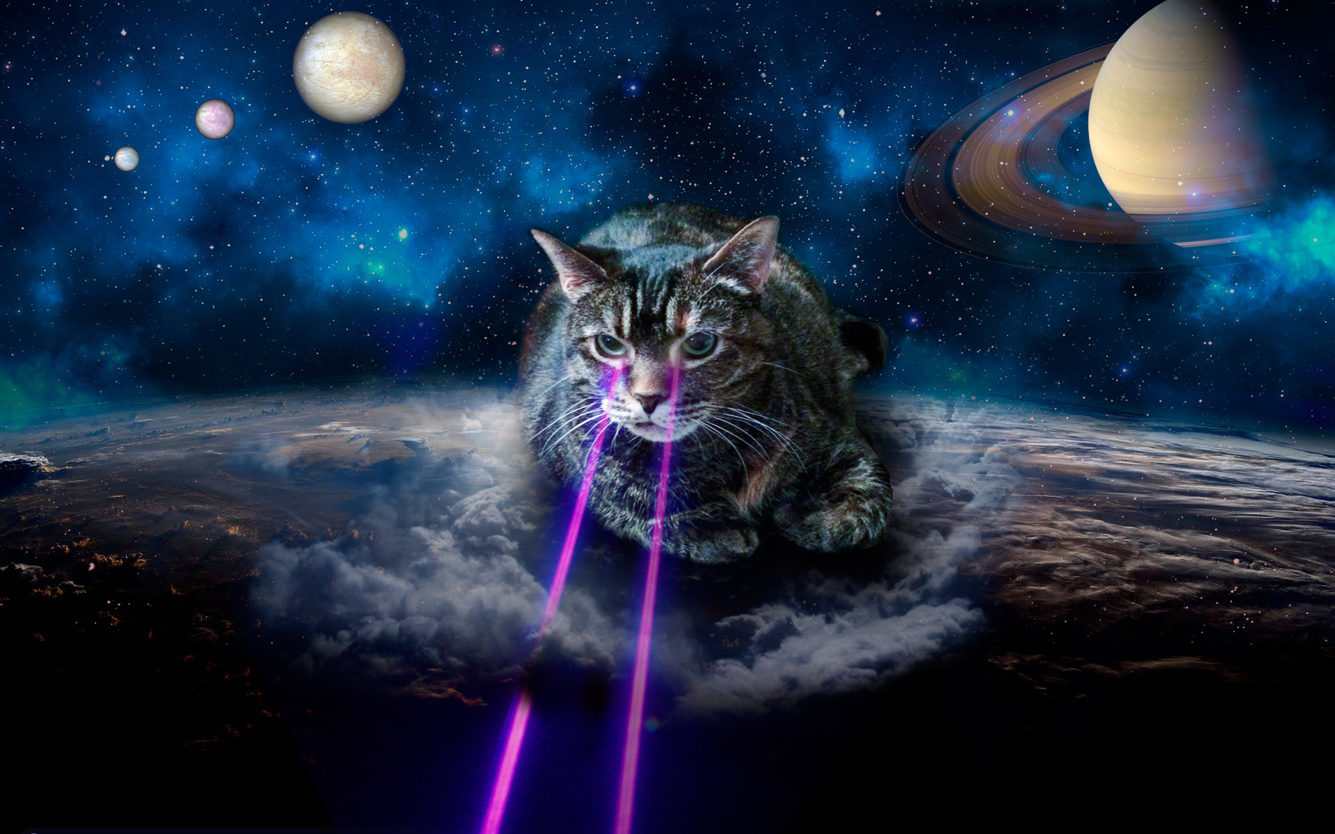 Cute Background Wallpaper For Computer Christmas Lights Animal Hd Shrine Of Laser Cats Wonkeyweb