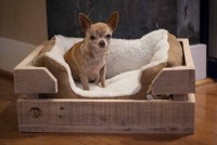 Pallet Dog Bed: Fun Filled Use of Pallet Woods | Wooden ...