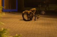 This Spider Dog Prank is One of the Best Pranks Yet ...