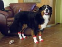 Modeling NonSlip Dog Socks