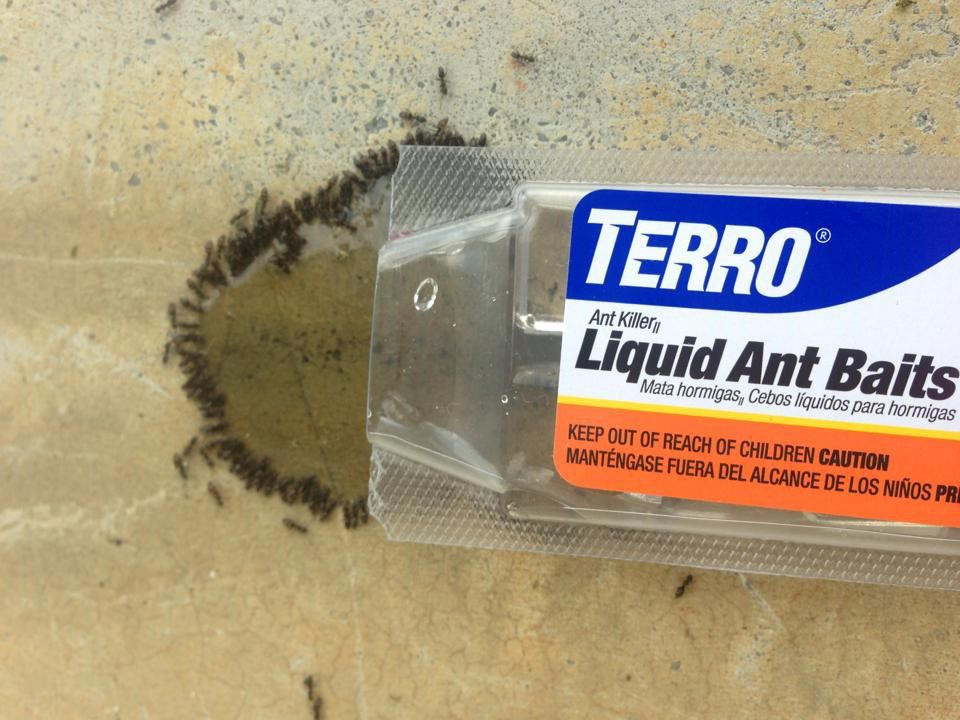 Odorous House Ant Facts | Odorous House Ant Control | TERRO®