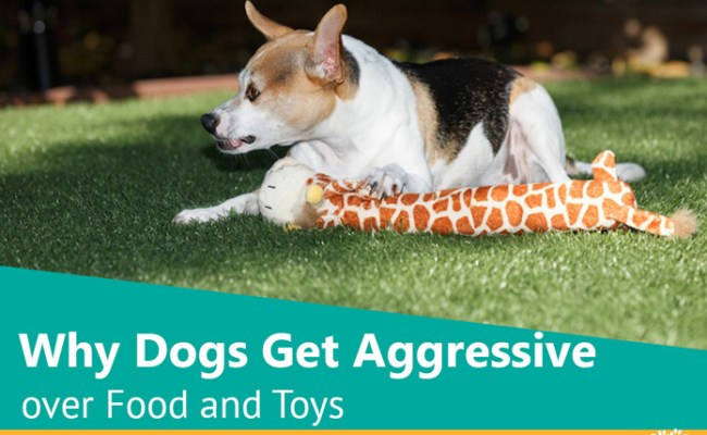 Why Dogs Get Aggressive Over Food And Toys Woof Dog