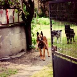 Small Of Dog Humps Girl