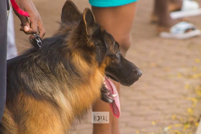 Pent Dog Show 2017 Ghana 2