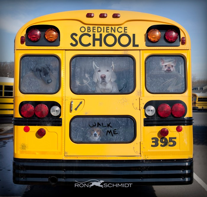 Back view of school bus full of devilish dogs going for obedience training