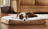 Animal Planet Sherpa Memory-Foam Dog Bed $25 Shipped ...