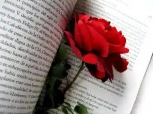 Rose_passion_novel_244517_l