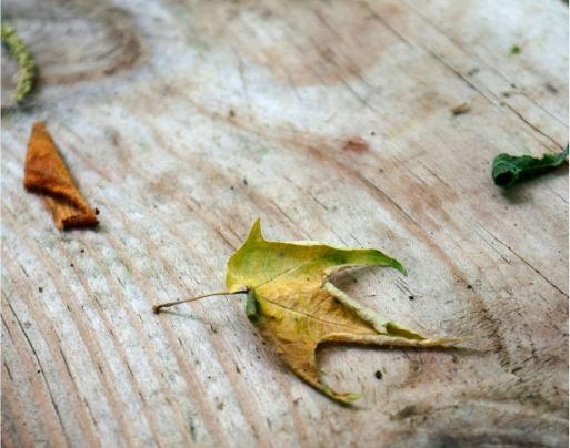 Tri-color Leaf