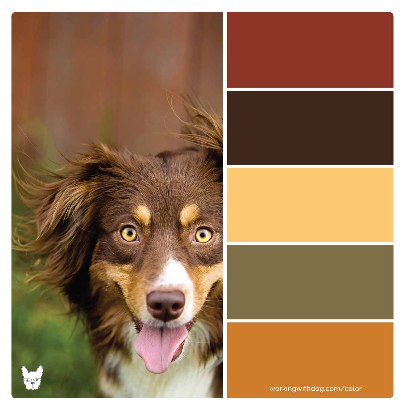 Color Palettes For Pet Brands