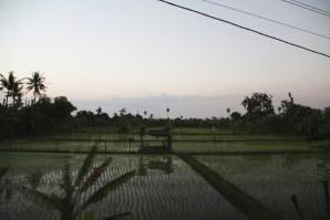Rice paddies at sunset