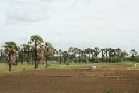 Bus to Mandalay Farm