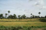 Bus to Mandalay Farms