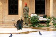 Suryagarh Peacocks