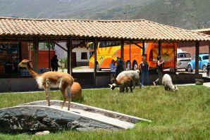 La Vicunita De San Pablo Courtyard