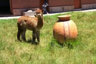 La Vicunita De San Pablo Sign Alpaca