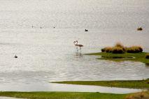 Laguna Lagunillas Flamingos