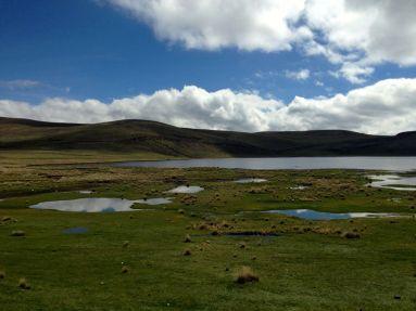 Laguna Lagunillas Grassy Ponds