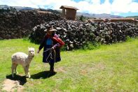 Raqchi Woman and Alpaca