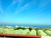 Algeria Drive