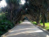 Algiers Le Jardin d'Essai du Hamma Path
