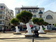 Algiers Trees