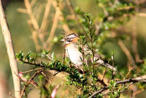Colca Lodge bird