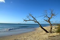 Fort James Beach Tree