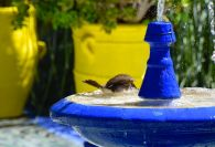 Majorelle Garden Bird