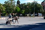 Marrakech Horsecart