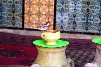 Kairouan Mosque of the Barber Bird