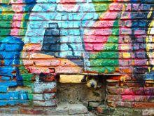 Montevideo Street Scene Dog