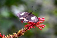 Guembe Biocenter Butterfly on flower