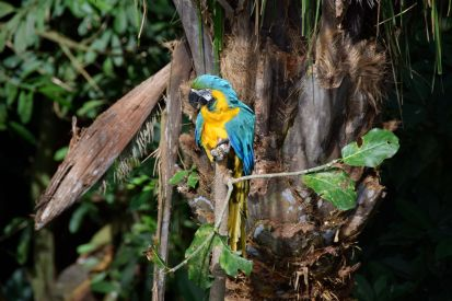 Guembe Biocenter Parrot Blue